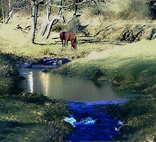 Down by the Stream by Judi Taylor