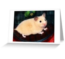 Pipi - the new hamster Greeting Card