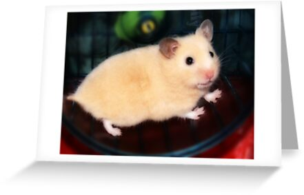 Pipi - the new hamster by George Parapadakis (monocotylidono)