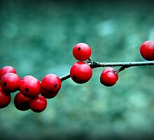 Winterberry by Gayle Dolinger