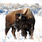 Winter Buffalo by blindwolfspirit