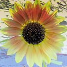 LOOKING  INTO A  SUNFLOWER    by Rick  Todaro