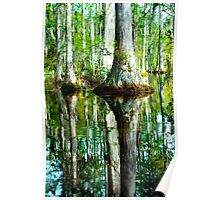 Swamp Tree Reflections Poster