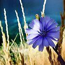 Flower by Miart