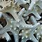 Starfish, Seashells and Sand Dollars