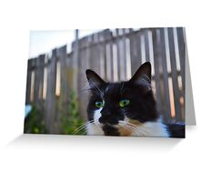 Kitten At Twilight Greeting Card