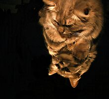 Mirror Cat In Light by terrebo