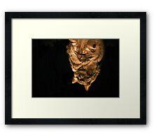 Mirror Cat In Light Framed Print
