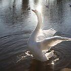 Swan by Natalie Richardson