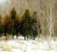 Forest Fantasy by Robin Webster
