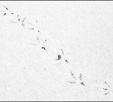 seagullbs footprints by hellsbell