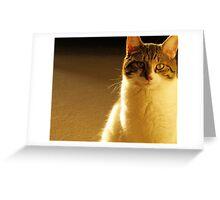 Tabby Turbo  Greeting Card