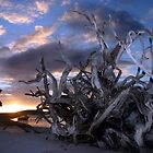 Twisted Tree Sunset by John Donatiu