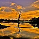 Wetland Dreaming - Wonga Wetlands, Albury NSW - The HDR Experience by Philip Johnson