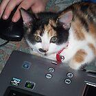 my IT kitten by dennis wingard