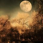Dark Trees and Moon by Sylvia Coomes