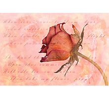 When roses cease to bloom... Photographic Print