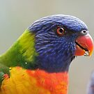 Rainbow Lorikeet by Jack Reynolds