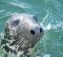 Grey Seal by Grahame Newell