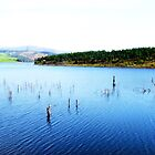 Lake in Venda by Cindy Coverly