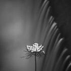 Still by David Piszczek