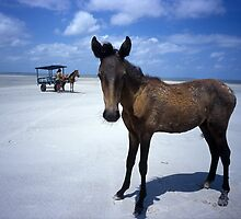 foal on beach by Nigel Hillier
