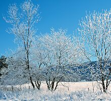 ICEY TREES, CADES COVE, GREAT SMOKY MOUNTAINS NP by Chuck Wickham