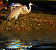 Sandhill Cranes by LudaNayvelt