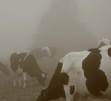 Cows in the mist by Gaspar Avila