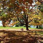 Tree Swing by Jan Morris