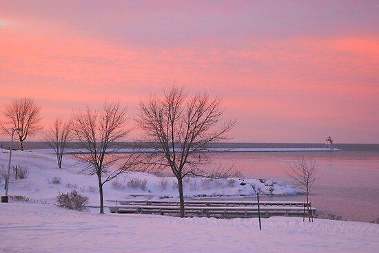 Morning Alive  by Shelby  Stalnaker Bortone