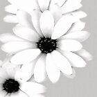 Daisy by Tammy  (Robison)Espino