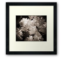 Autumn in Infrared Series , No. 1 Framed Print