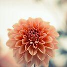 Dahlia Flower No. 3 by Ross Jardine