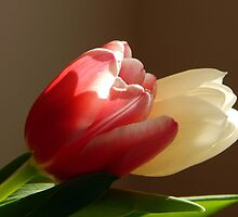 Two tulips by Karen Cook