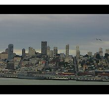 San Francisco by reneegw