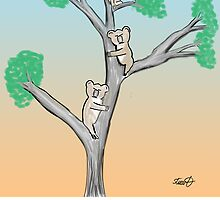 Koala Cartoon- The Mating Game by David Stuart