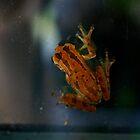 Window Frog by Dennis Blauer