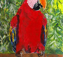 Red Macaw by GEORGE SANDERSON