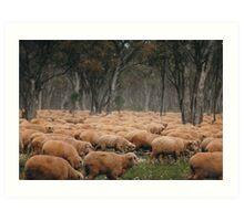 Droving Sheep at Albert  © Vicki Ferrari Photography Art Print