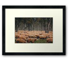 Droving Sheep at Albert  © Vicki Ferrari Photography Framed Print