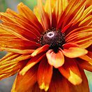 Orange Daisy by SmilinEyes