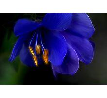Passionate Blue Photographic Print