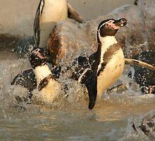 Penguin Splash by amjaywed