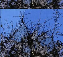 Branches in Blue by DeneWest