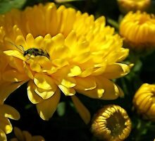 Lady Bug Yellow by Kay  G Larsen