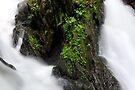 An Island of Green by Stephen Beattie