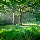 Sunlit Glade: Dartmoor (Near Goodameavy) Devon UK by DonDavisUK
