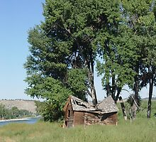 Barn in the Cottonwoods by May Lattanzio
