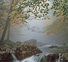 A FOGGY MOUNTAIN STREAM by Chuck Wickham